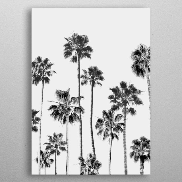 Black & White Palms 3 metal poster