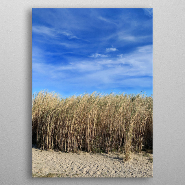 Near the sea, towards a salt pond, a field of reeds on the beach. Behind is a surf, windsurf or stand up paddle secret spot? Yes... metal poster