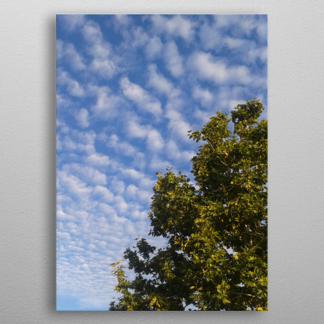 Photography of a tree on a cloudy sky background metal poster