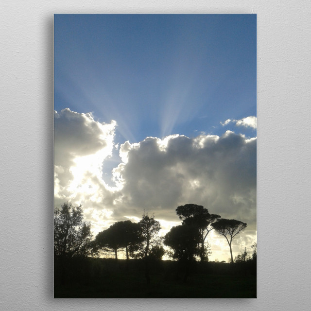 Photo of a pinetree forest skyline metal poster