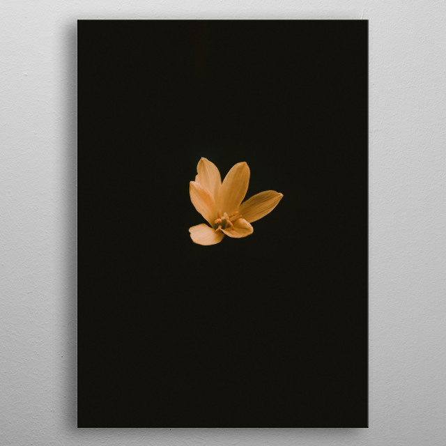A minimalist shot of a flower on a black background.  metal poster