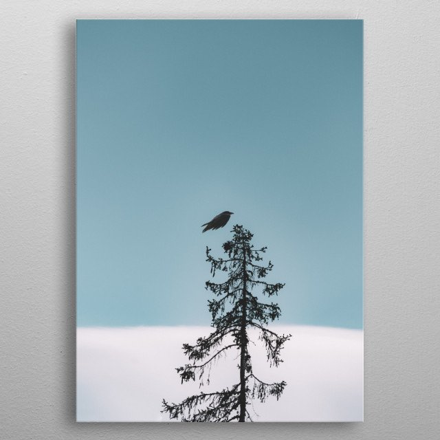 A crow about to perch on a tall tree. metal poster