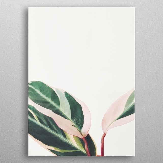 A minimal still life plant photograph in shades of pink and green. metal poster
