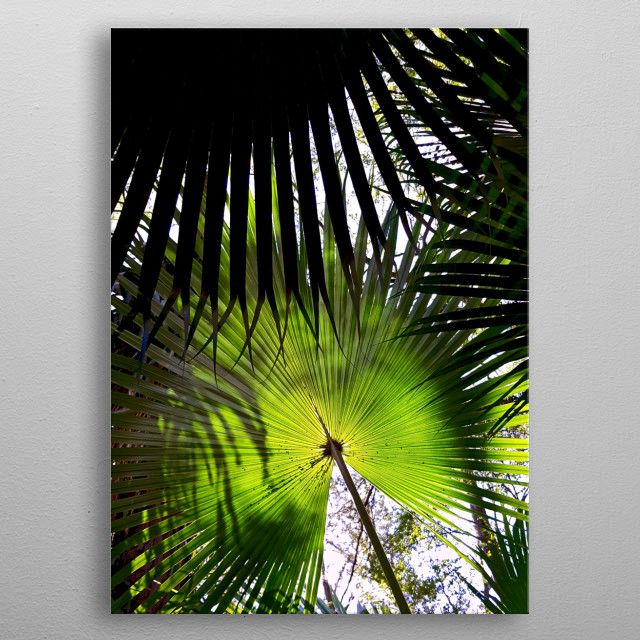 What a beautiful photography of a sunshade made by nature. metal poster