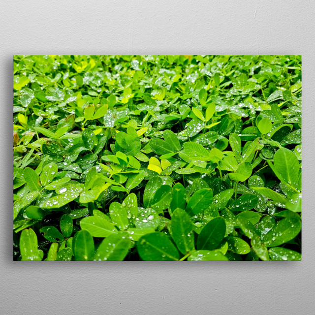 That's so good when the rain fall over the greenery. metal poster