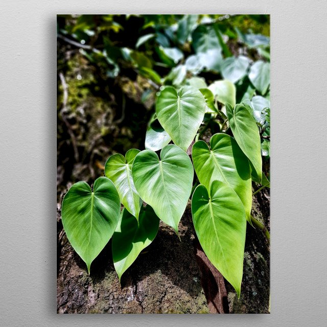 Photography of greenery over the tree trunk. metal poster
