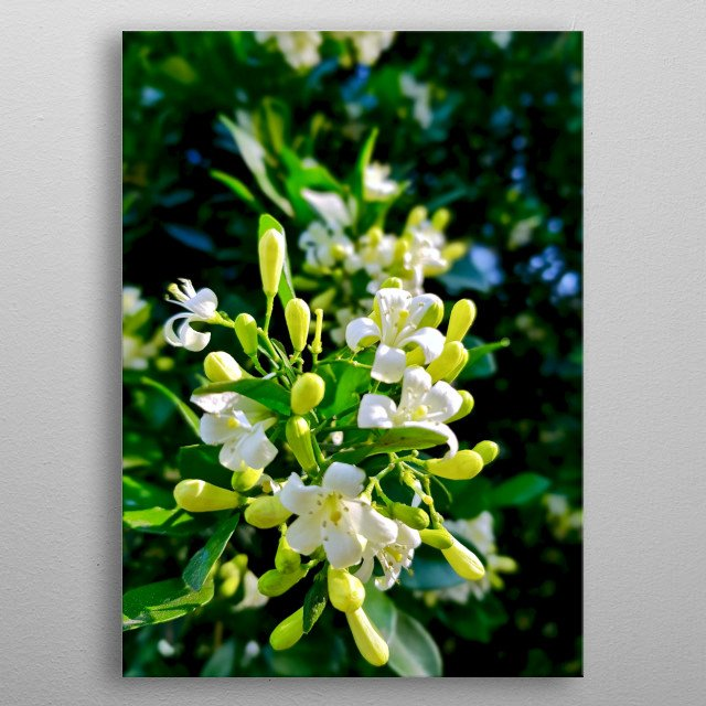 Photography of this beautiful flower!!! metal poster