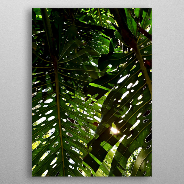 i love to see the sunlight between the monstera. metal poster
