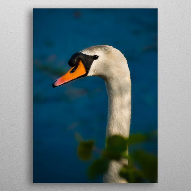 Swan metal poster