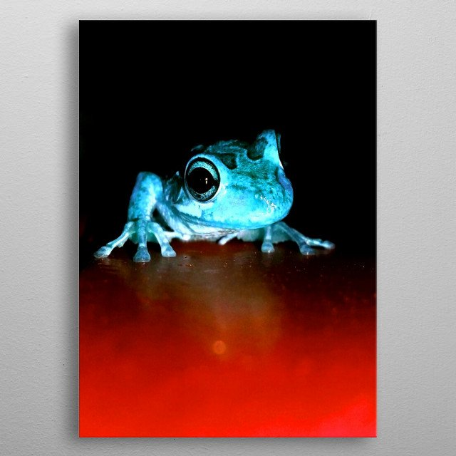 The way this frog moved while scaling a wall instantly reminded me of Spider-Man. metal poster