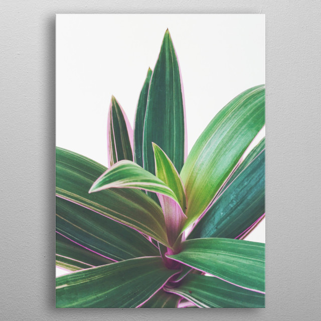 A still life photograph of a beautiful Oyster Plant. metal poster