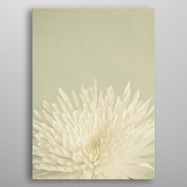 A close up still life photograph of a pretty white flower against a pale olive background. metal poster