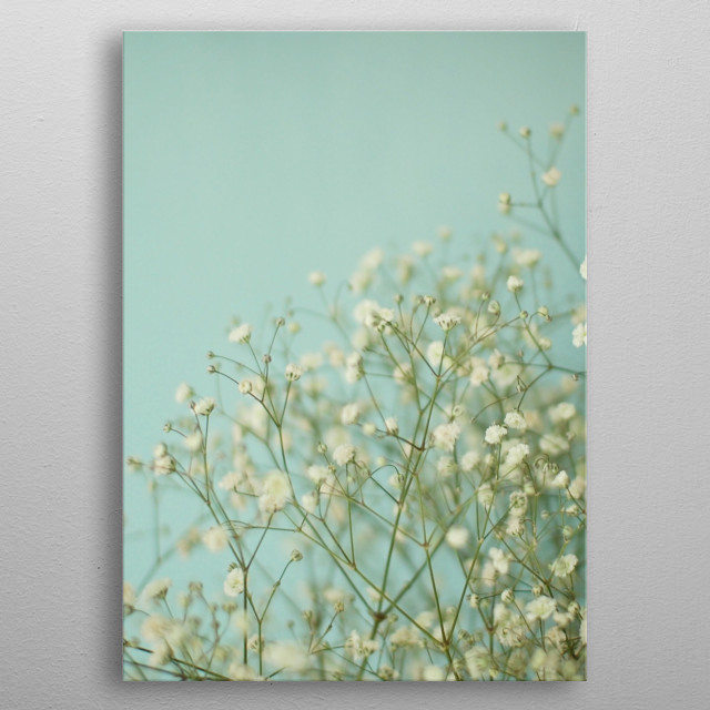 A still life photograph of Gypsophila flowers against a blue background. metal poster