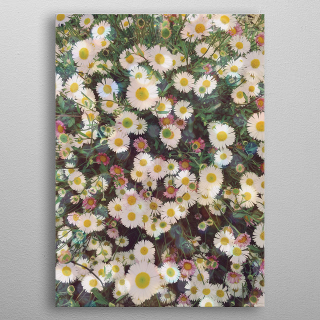 A photograph of a cluster of pretty daisies. metal poster