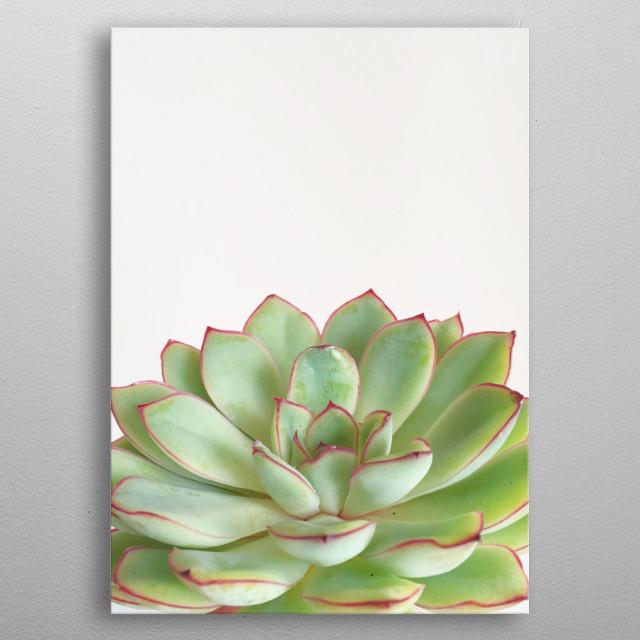 A minimal still life photograph of green succulent. metal poster