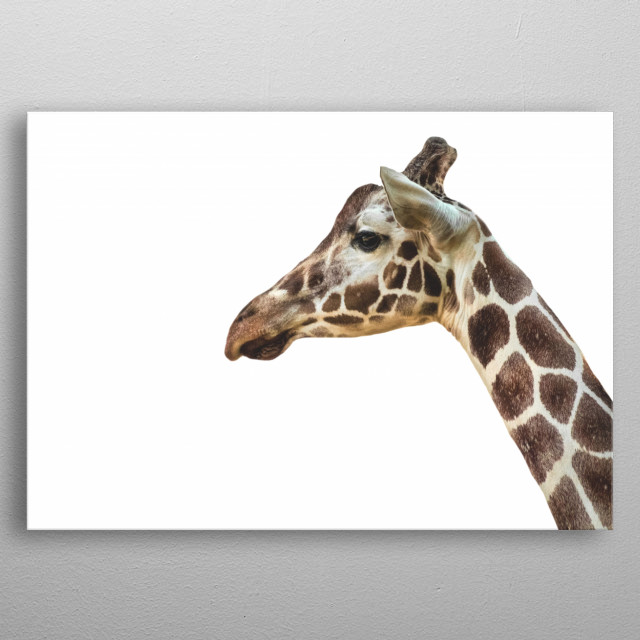 Minimalist Giraffe, Kruger National Park | South Africa  metal poster