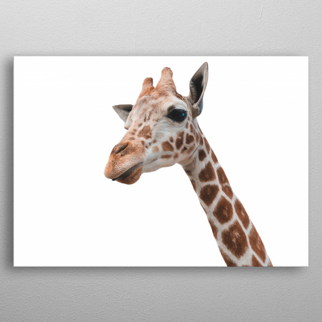 Minimalist Giraffe, Kruger National Park | South Africa  metal poster