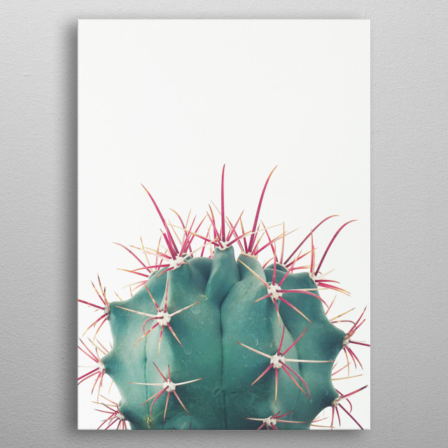A minimal still life photograph of a cactus plant. metal poster