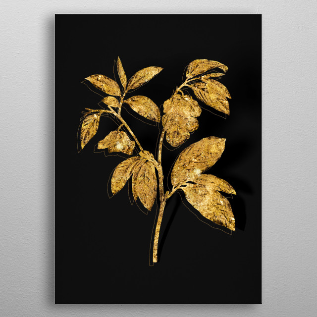 Botanical drawing in GOLD!!! Digitally rendered, gilded and outlined in sparkly glitter on black. From Expanded Collection metal poster