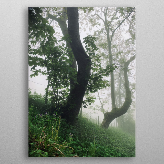 A morning in the mountains. A walk on forest roads, we are alone. A magnificent fog plays with the shades of green. Everything is so quiet. metal poster