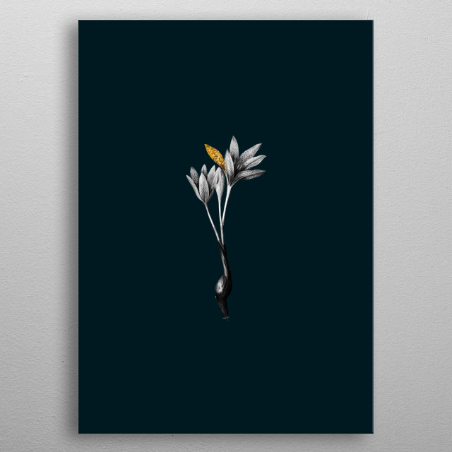 Vintage Botanical Illustration. High Res From Original Engraving. Black and White Isolated On Rich Teal Background and Partially Gilded  metal poster