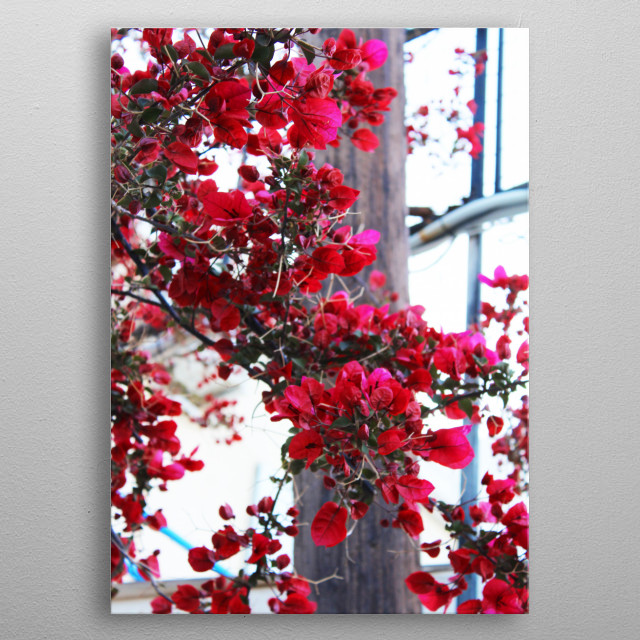 Tree with red leaves. metal poster