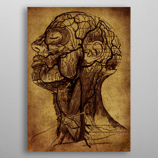 vintage poster showing veins and nervous system of the human face metal poster