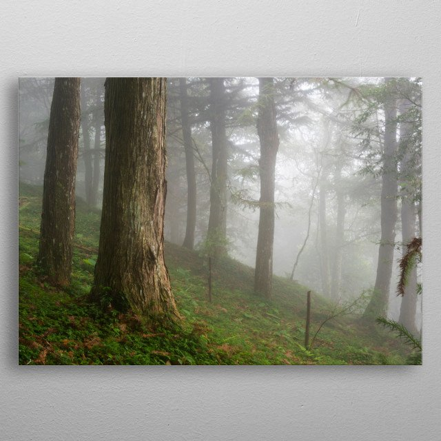 The thick fog covers the forest and creates a poetic atmosphere. metal poster