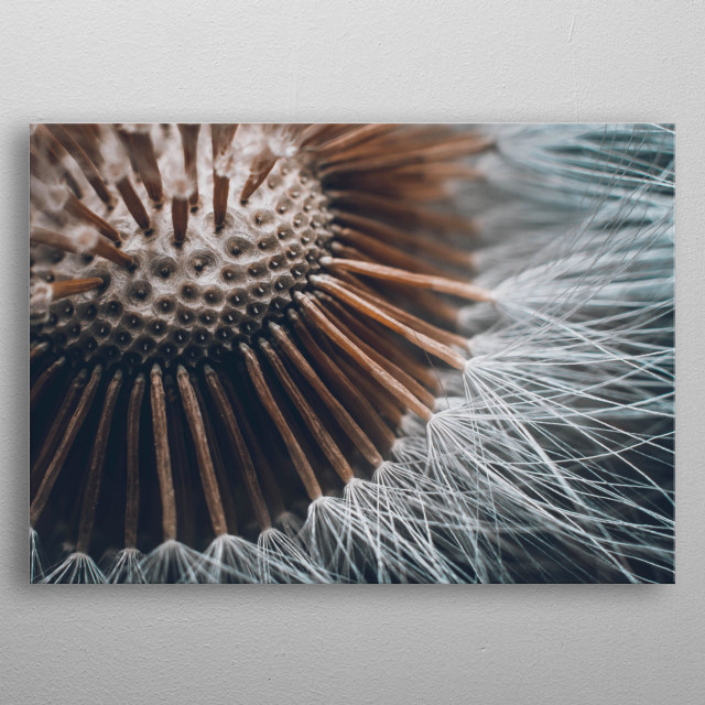 A dandelion Clock with a dark and grunge edit. metal poster