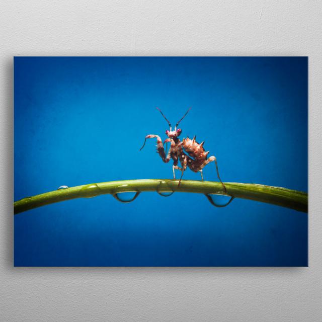 A spiny flower mantis metal poster
