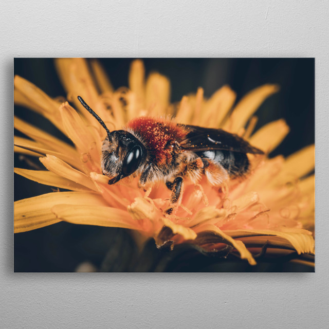 A bee and a dandelion clock. metal poster