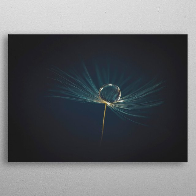 A water drop on a dandelion clock. metal poster