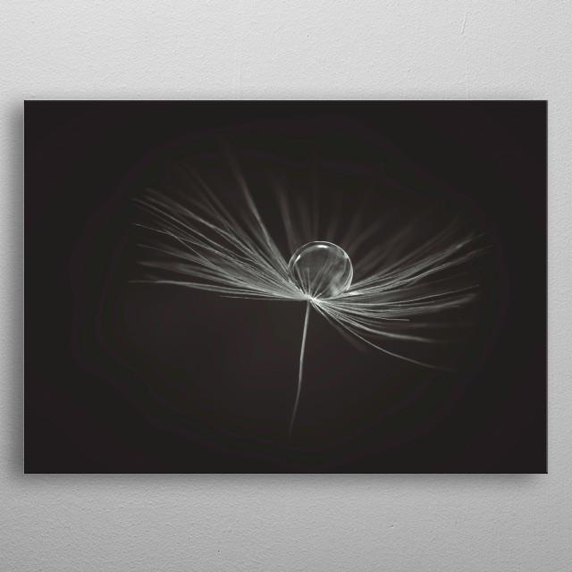 A water drop on a dandelion clock. metal poster
