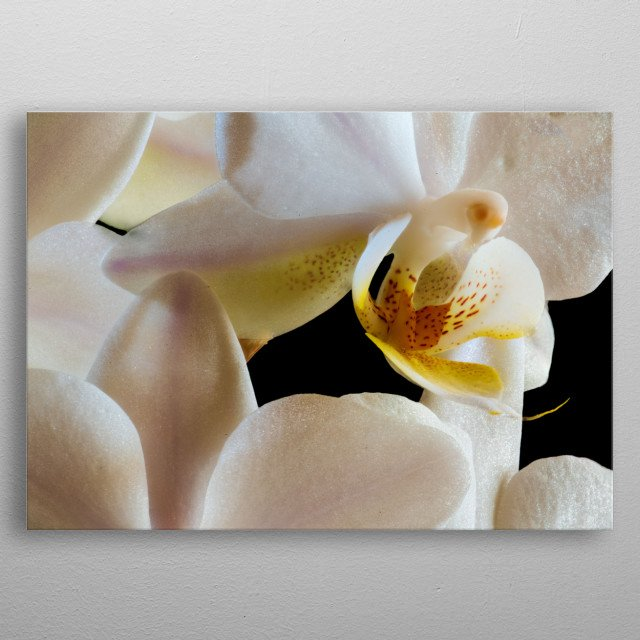 macro of the inside of an  white orchid with yellow petals metal poster
