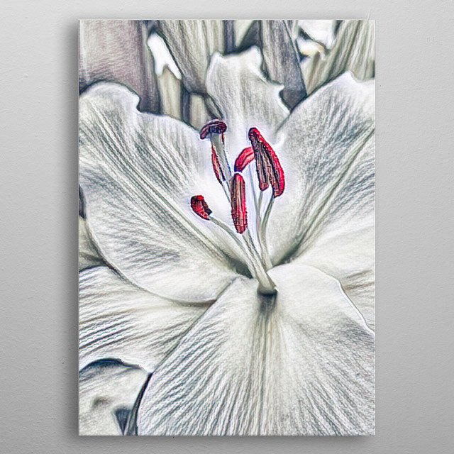 abstract white lily for holidays metal poster