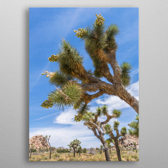 Joshua Tree National Park is located in southeastern California. The park is named after the Joshua palm lilies, also known as Joshua Trees. metal poster