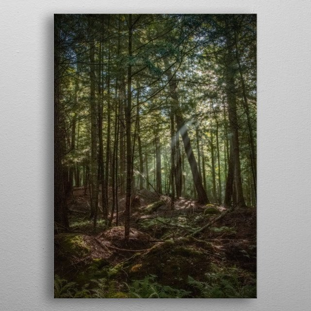 Rays of morning sun stream through a canopy of woodland trees. Green moss and ferns adorn the forest floor. Enhanced with a grainy texture. metal poster