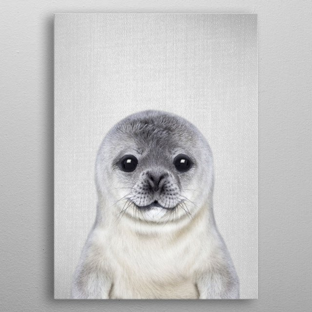 """Baby Seal - Colorful.  For more colorful animals check out the collection in the main page of my shop """"Gal Design"""". metal poster"""