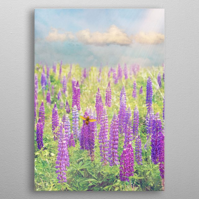 Collage with a field of purple lupines. The sky is blue with fluffy white clouds and sunrays. A bee works busily in the foreground.  metal poster
