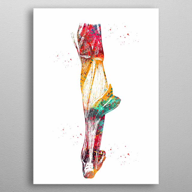 Leg muscle, watercolor,  anatomy, medical art, wall decor, poster, science metal poster