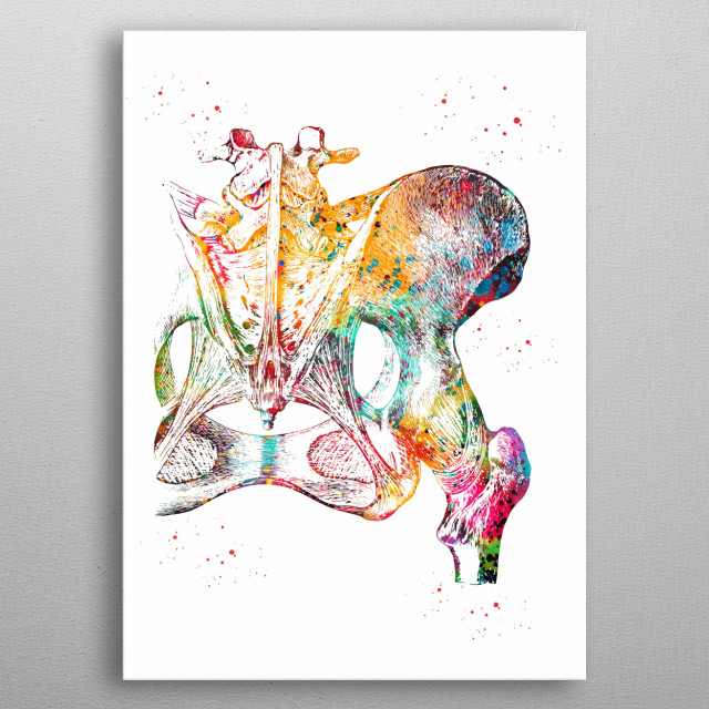Hip bone, ligaments and joint, watercolor, medicine art, poster, wall decor, science metal poster