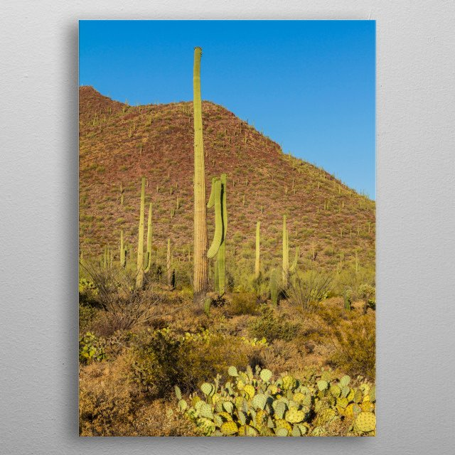 The Saguaro cactus stands symbolically for the west of the USA. This is an impression from the western part, the Tucson Mountain District.  metal poster