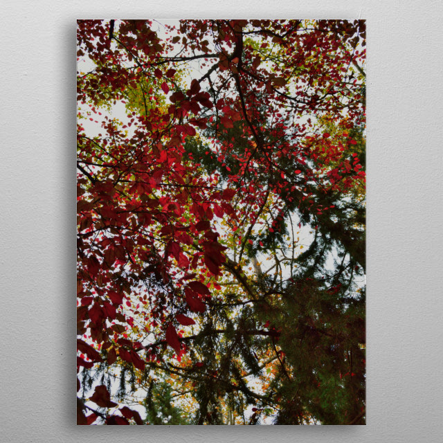Beautiful scene of colorful autumn leaves in the forest.   metal poster