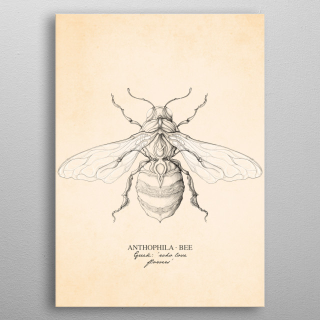 Bees are flying insects closely related to wasps and ants, known for their role in pollination. P.S. Save the bees. metal poster