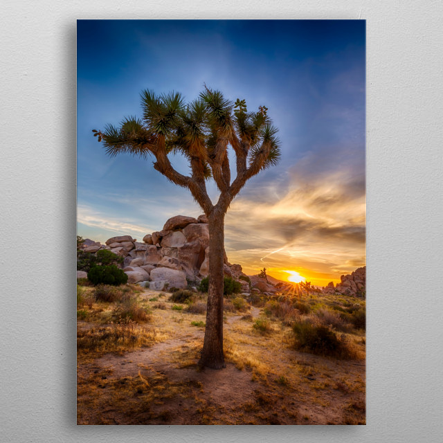 Joshua Tree National Park is located in southeastern California. The park is named after these Joshua palm lilies. Charming sunset. metal poster