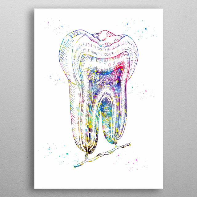 Human tooth structure, watercolor medical art, science, wall decor metal poster