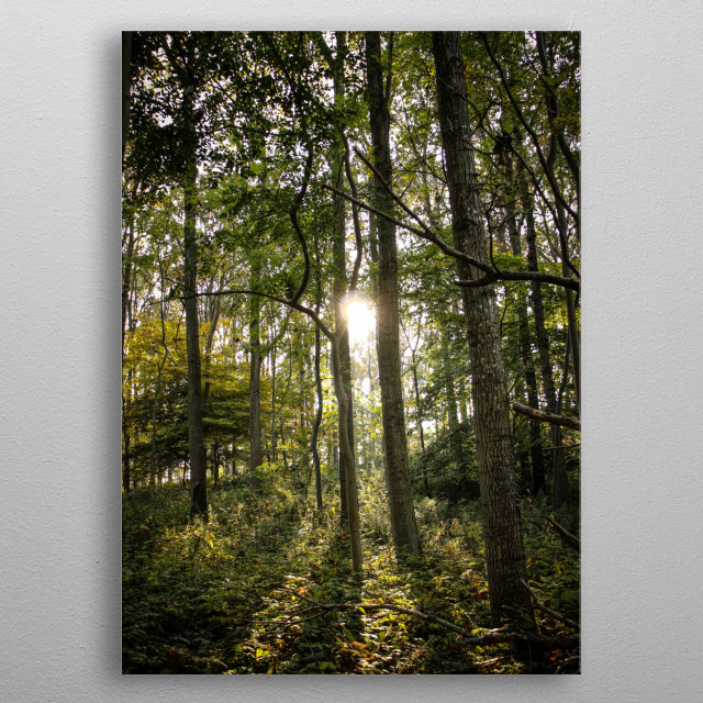 A green forest in Denmark metal poster