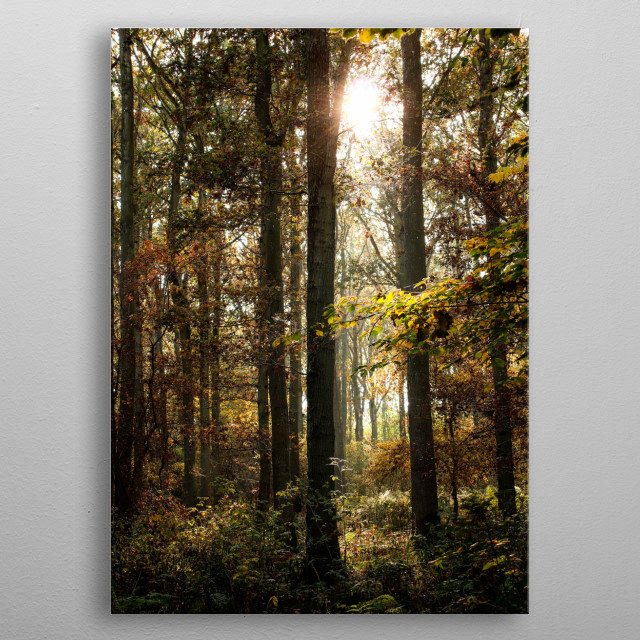 A silent moment with a light forest in Denmark metal poster
