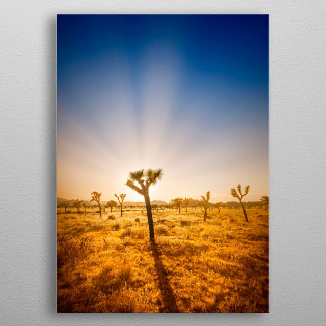 Joshua Tree National Park is located in southeastern California. Lovely sunset with a Joshua Tree and the typical desert landscape. metal poster