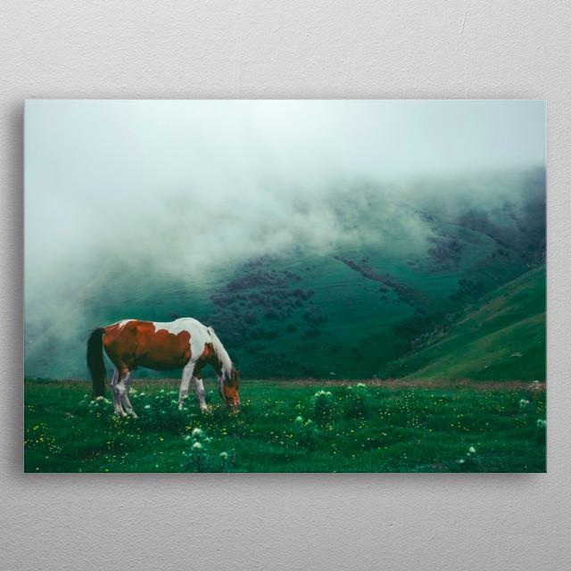 WILD HORSE IN SCOTLAND metal poster